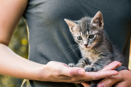 woman holding cat in hands.