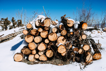 Pile of chopped logs on snow. Sunny day on the mountain.