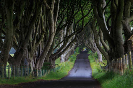 northern ireland: The Dark Hedge, Northern Ireland Stock Photo