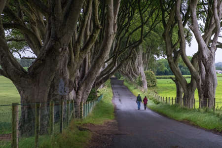 umbella: Northern Ireland, UK - Unidentified couple are taking a walk visiting the Dark Hedge, the romantic, atmospheric, tunnel-like avenue of intertwined beech trees Stock Photo
