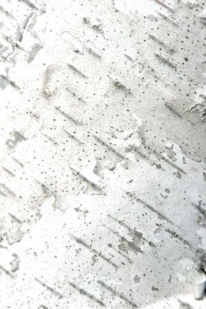 Organic Texture- Close up of White Birch Tree Bark- vertical