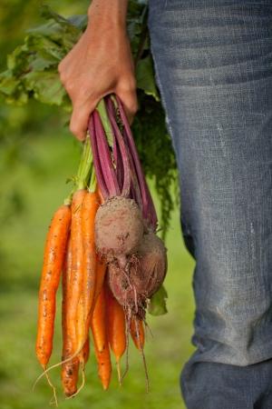 Een vrouw s hand die geoogste groenten op groene achtergrond Stockfoto