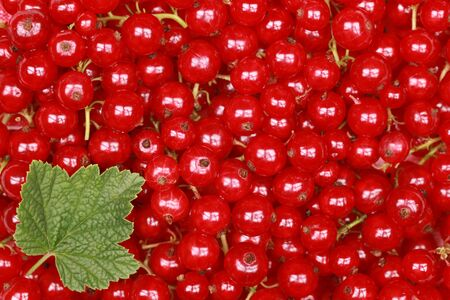 red currants: Freshly picked red currants with a leaf form a background Stock Photo