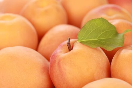 Closeup of a group of fresh apricots with a leaf Stock Photo - 15376375