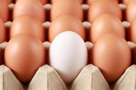 One white egg surrounded by brown eggs in a box. Selective focus on the white egg. photo