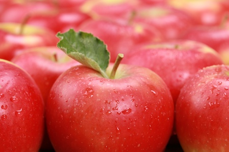 Closeup of red apples with water drops Stock Photo - 16213522