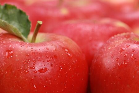 Closeup of red apples with water drops, selective focus. Stock Photo - 16481629
