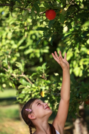 Young girl reaching up for an apple under an apple tree photo