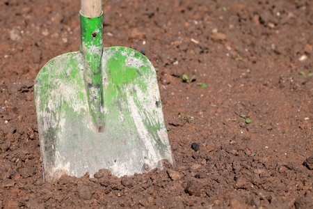 A shovel put in the soil in a garden photo