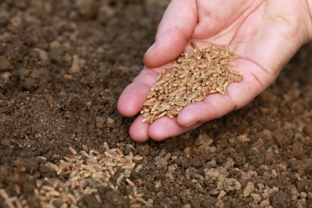 A hand is sowing seeds in the dirt in a garden photo