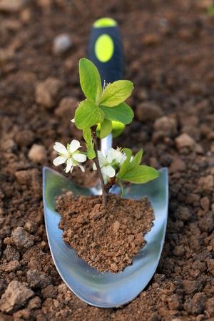 empezar: Una pequeña planta crece en una paleta de siembra en un jardín