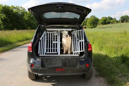 Hond zit in een kofferbak en wachten voor reizen Stockfoto