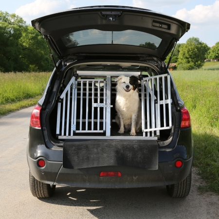 Dog pet sitting in a car trunk and wants to travel Stock Photo