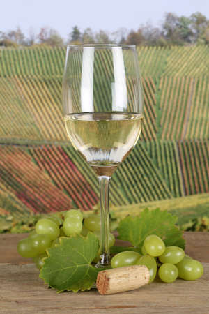 winetasting: White wine in a glass in the vineyards with grapes Stock Photo