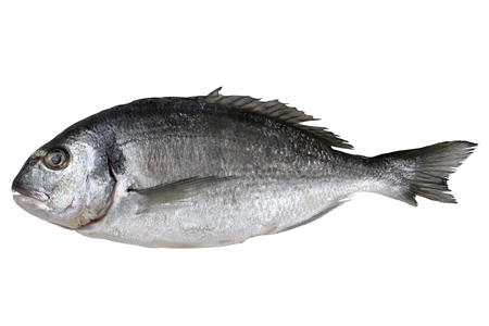 sparus: Fresh fish gilthead isolated on a white background
