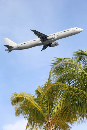An airplane traveling between palm trees into vacation during a holiday