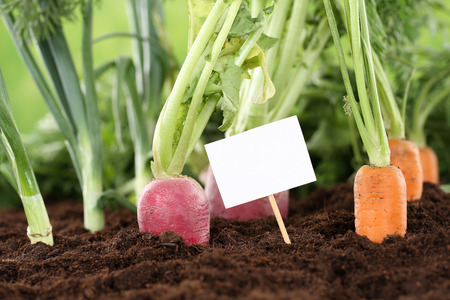 farm sign: Healthy eating fresh vegetables in a vegetarian garden with a white sign