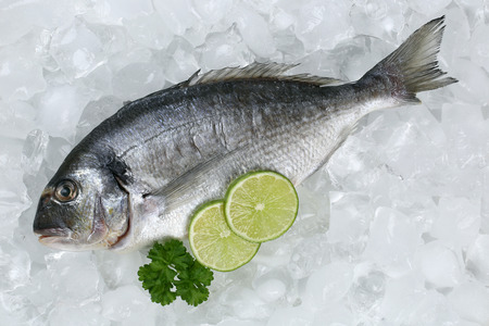 gilthead: Fresh fish gilthead on ice in a restaurant Stock Photo