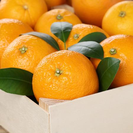 감귤류의 과일: copyspace와 상자에 오렌지 감귤류