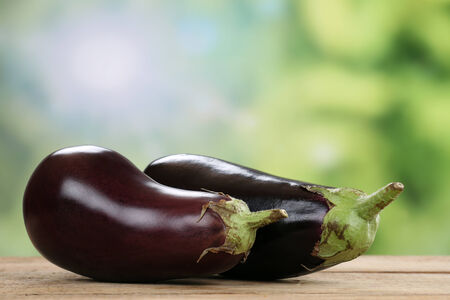 eggplants: Fresh eggplant vegetables in summer with copyspace Stock Photo