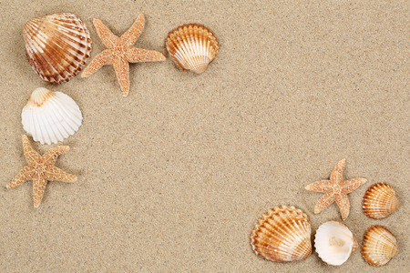sea shells on beach: Beach scene in summer vacation holiday with sand, sea shells and stars and copyspace