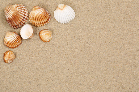 Beach scene in summer holiday with sand, sea shells on vacation and copyspace