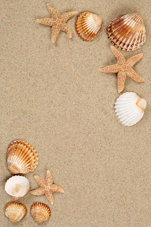 shell: Sandy beach scene in summer vacation holiday with sand, sea shells and stars and copyspace
