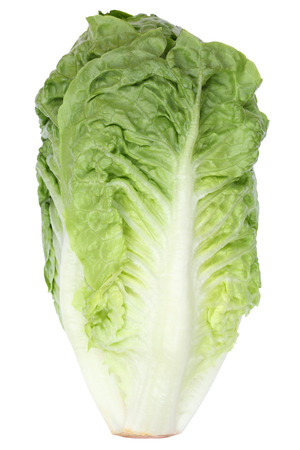 romaine lettuce: Romaine lettuce side view vegetable isolated on a white background