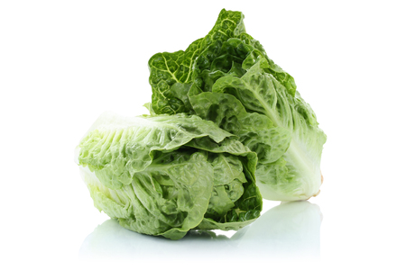 Romaine lettuce vegetable isolated on a white background