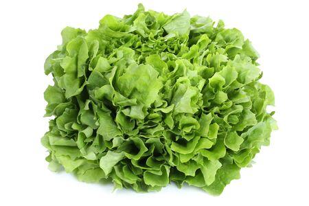 vegetables on white: Lettuce vegetable isolated on a white background