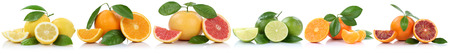 citrus: Collection of oranges mandarins lemons grapefruit fruits in a row isolated on white background Stock Photo