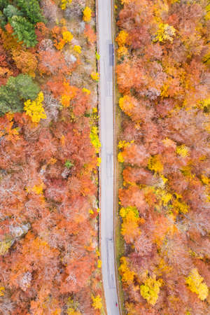 Autumn fall forest woods colorful leaves season aerial photo view road portrait format in Germany