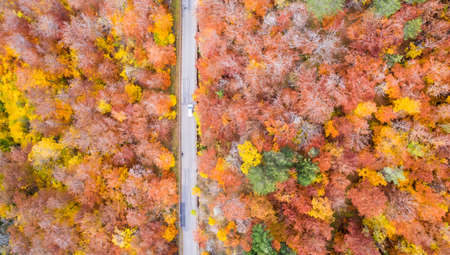 Autumn fall forest woods colorful leaves season aerial photo view road in Germany 版權商用圖片