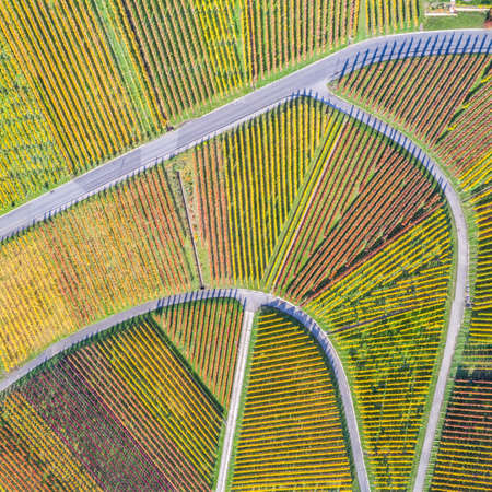 Vineyards wine autumn fall season aerial photo view square nature in Germany
