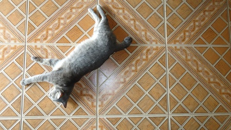 Cat on the tiles photo