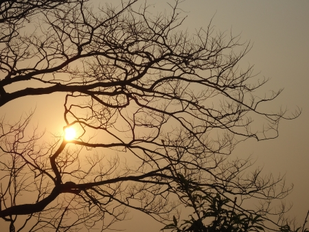 Sunrise in smog through the tree photo