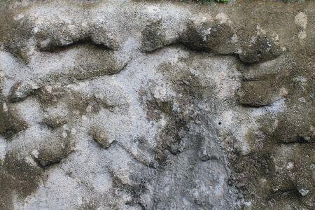 silver fern: Cements mixed rock