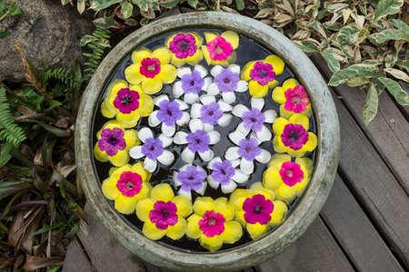 Flower in jar in the garden. photo