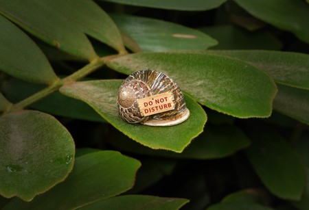 A snail on a leaf with a wooden sign which says do not disturb Stock Photo
