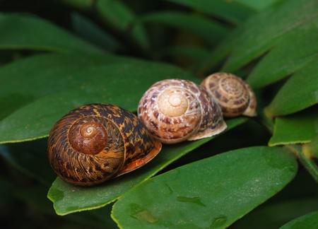 3 Snails on a leaf
