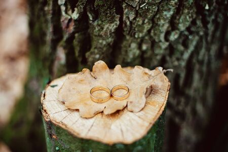 dry leaf: Two golden wedding rings on the cracked oak stump with a dry leaf