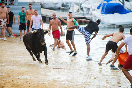 Bull being teased by brave young men in arena after the traditional spanish running-with-the-bulls during fiesta in the streets of Denia, Spain