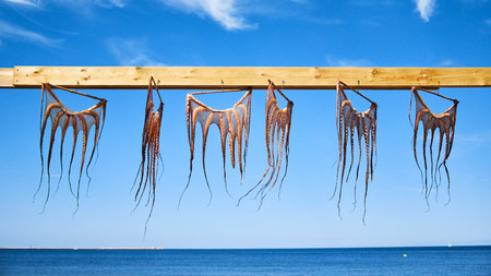 Traditional octopus drying in Spain Denia. Octopus on the background of a blue sky