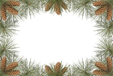 a frame of pine needles and pine cones
