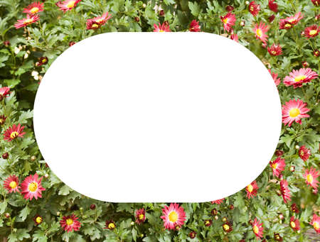 color frame of fresh flowers
