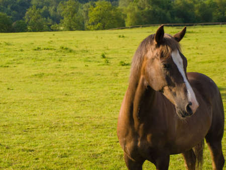 Horse in Beautiful Green Field in British Summer Morning Stock Photo - 3187820