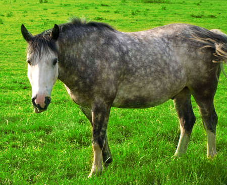 Horse in Beautiful Green Field in British Summer Morning Stock Photo - 3264816