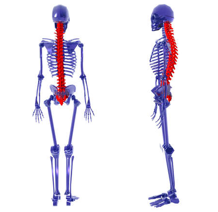 Blue glass Human Skeleton over White Bad Back Stock Photo - 4036143