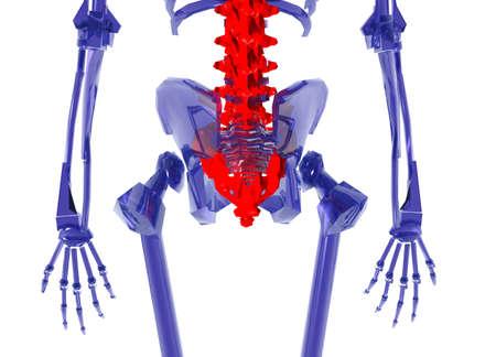 Blue glass Human Skeleton over White Bad Back Stock Photo - 4036128