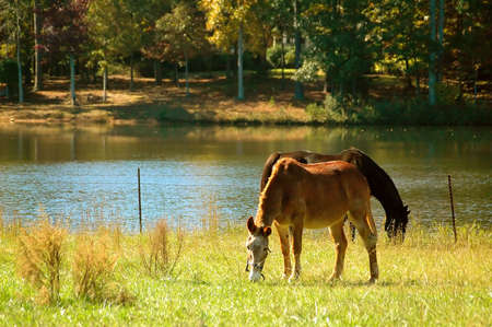 Horses by the Lake Stok Fotoğraf